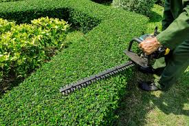 Garden Maintenance Services Dubai