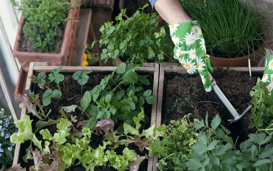 gardening services in Dubai